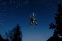 Spider-02-1