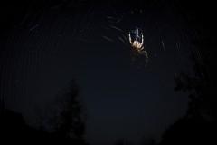 Spider-02-2